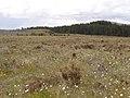 Bogland Meadow - geograph.org.uk - 451002.jpg