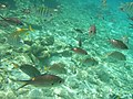 Bonaire M0010461 (2085014077).jpg