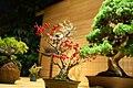 Bonsai exhibition in the Moscow Botanical Garden, Moscow; November 2015 (04).jpg