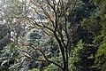 Border Ranges National Park NSW-2702.jpg