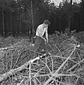 Bosbewerking, arbeiders, boomstammen, takken, struiken, Bestanddeelnr 251-9126.jpg