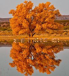 Bosque del Apache National Wildlife Refuge (10440965175).jpg