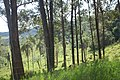 Bosques Itá-Curuzú.jpeg