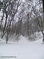 Botanic Garden in winter - panoramio - eugeneloza (8).jpg