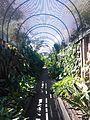 Botanical Garden, Puerto de la Cruz 05.jpg