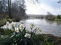 Boyce Court pond near the Daffodil Way - 2 - geograph.org.uk - 768480.jpg