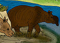 Brachycrus laticeps.jpg