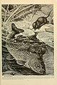 Brehm's Life of animals (Page 301) (6220167021).jpg