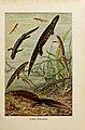 Brehms Tierleben (Plate- Deutsche Wassermolche) (6140217976).jpg