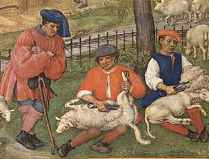 History of the domestic sheep - Sheep shearers, Flanders, from the Grimani Breviary c. 1510
