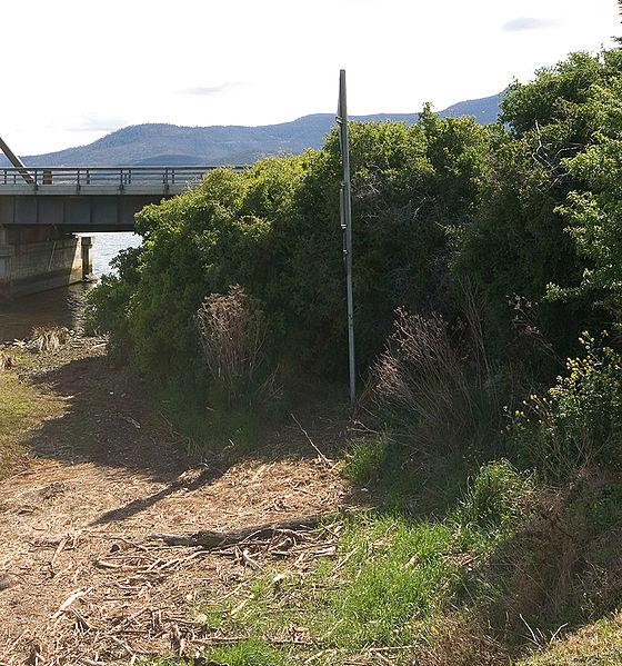 File:Bridgewater Bridge bushes crop.jpg