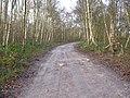 Bridleway, Hotham Carrs - geograph.org.uk - 1601974.jpg