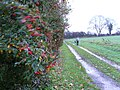 Bridleway at Breach Farm - geograph.org.uk - 284076.jpg