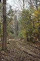 Buč, lesní cesta.jpg