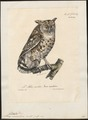 Bubo maculosus - 1825-1834 - Print - Iconographia Zoologica - Special Collections University of Amsterdam - UBA01 IZ18400099.tif
