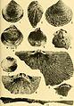 Bulletins of American paleontology (1953-1955) (20314902820).jpg