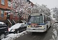 Buses in the snow (12306238435).jpg