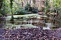 Bushy Park, Dublin -123656 (30383108194).jpg