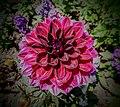 Butchart Gardens - Victoria, British Columbia, Canada (29102884231).jpg