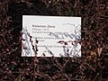 Butterfly (Zénó Kelemen), sign, 2021 Zugló.jpg