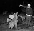 C'mon Hyena, Jump. (14715449773).jpg