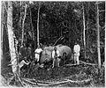 COLLECTIE TROPENMUSEUM Groep jagers met hun prooi een neergeschoten olifant. TMnr 60001617.jpg