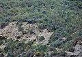Cabras Montesas-Alpujarra.jpg