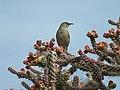 Cactus Bird (5466139963).jpg