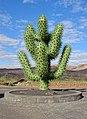 Cactus sculpture - César Manrique - Guatiza.JPG