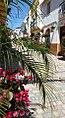 Calle cruz looking up - Estepona Garden of the Costa del Sol.jpg