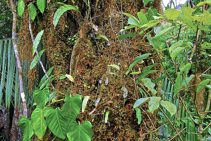 File:Camino a Durika, Provincia de Puntarenas, Costa Rica - panoramio.jpg