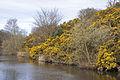 Canal side (3390455496).jpg