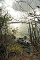 Caneel Bay Turtle Point Trail 3.jpg