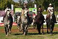 Carroussel à 16 chevaux montés Mondial du percheron 2011 Cl J Weber10 (24083506445).jpg