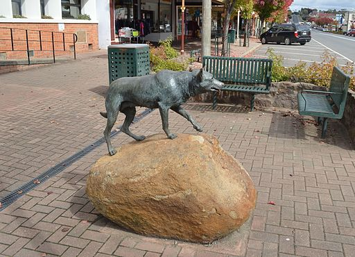 Casterton Kelpie Monument 002