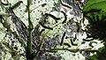 Caterpillars in a Web (27775167555).jpg