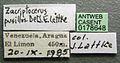 Cephalotes pusillus casent0178648 label 1.jpg