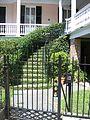 Charleston Ivy.jpg