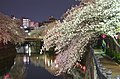 Cherry blossoms at night - panoramio (1).jpg