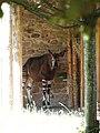 Chester Zoo (12226838944).jpg
