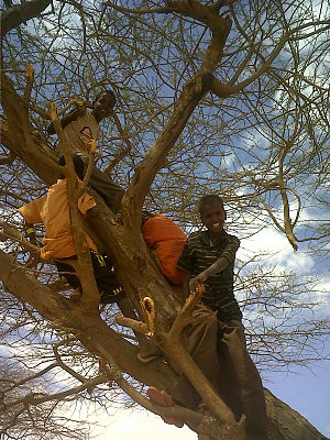 Tree climbing - Image: Children climbing a tree in the Dadaab refugee camp, north east Kenya (5942667619)
