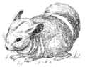Chinchilla (PSF).png