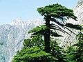 Chitral Gol National Park - panoramio.jpg