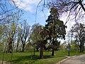 Chkalov Health Spa park 01.jpg