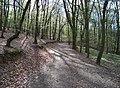 Chuchelský háj, lesní cesta (01).jpg