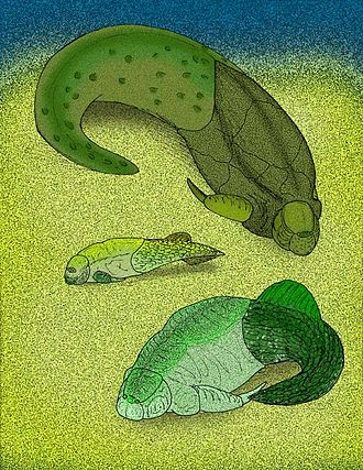 Antiarchi - Chuchinolepis, Vanchienolepis and Yunnanolepis
