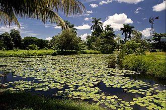Zapata Swamp - The swamp has a dense habitat