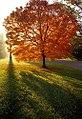 """Cincinnati - Spring Grove Cemetery & Arboretum """"Autumn Luminous"""" (4052979247).jpg"""