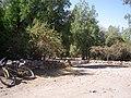 Cipreses (Tricahues). - panoramio (1).jpg