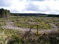 Clear felled - Toormacnevin Townland - geograph.org.uk - 1319471.jpg